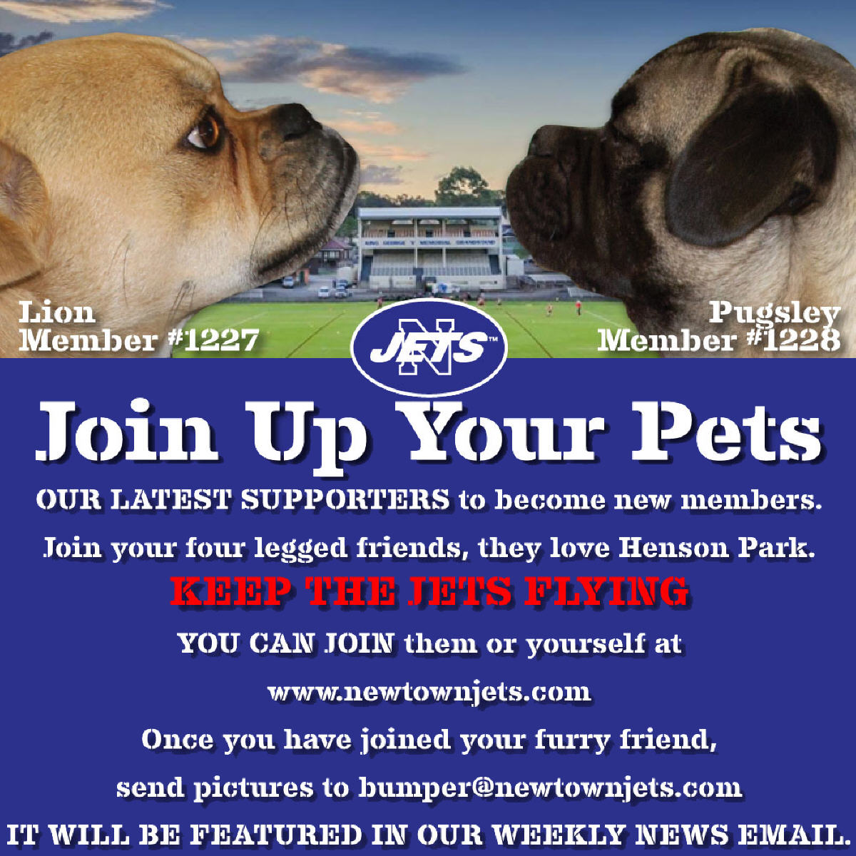 Join Up Your Pets poster web